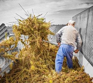 Медихемп - сътрудничество с фермери за добив на коноп