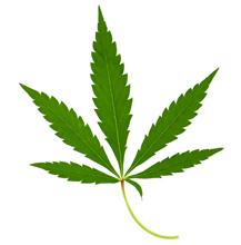Растението коноп