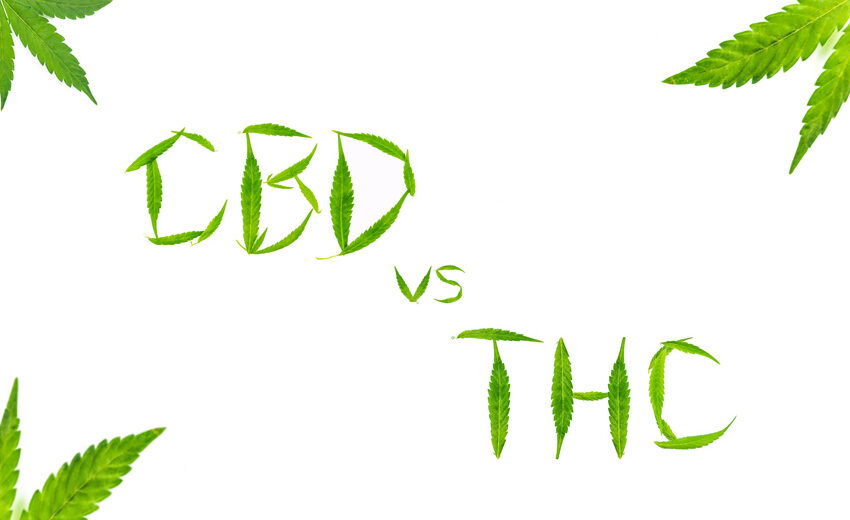 Каква е разликата между коноп и марихуана?
