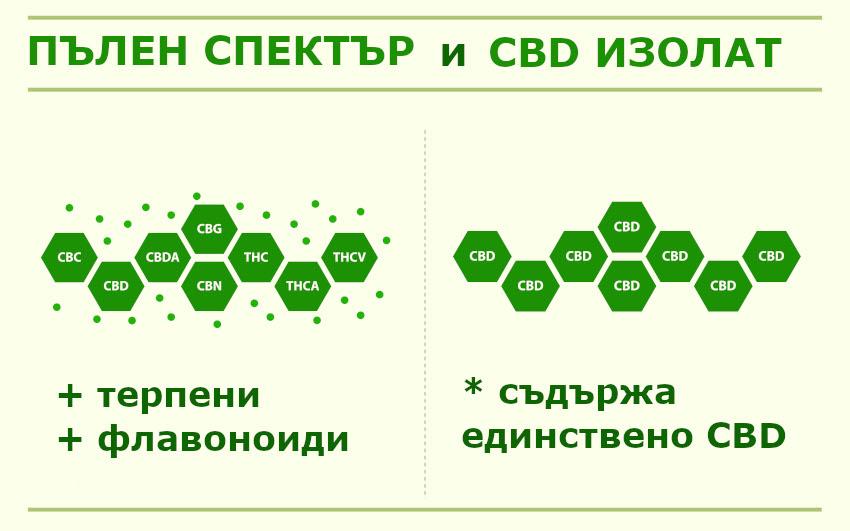 Сравнение между CBD изолат и CBD пълен спектър
