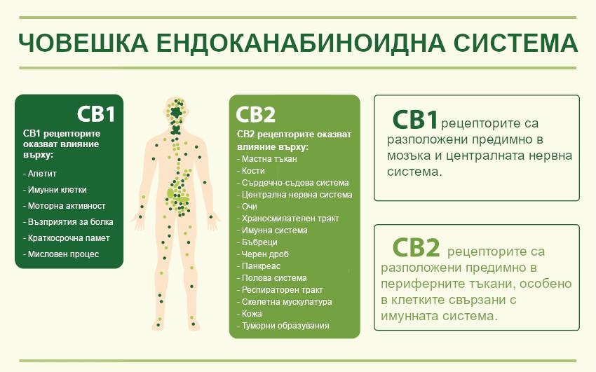 Ендоканабиноидни рецептори