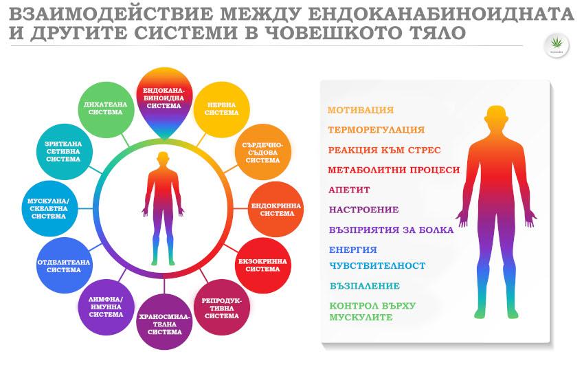 Функции на ендоканабиноидната система