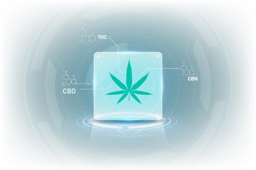 CBD, CBD и THC