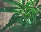 CBD и CBN – полезни свойства и основни разлики